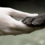 Nozick, la souffrance et le droit des animaux